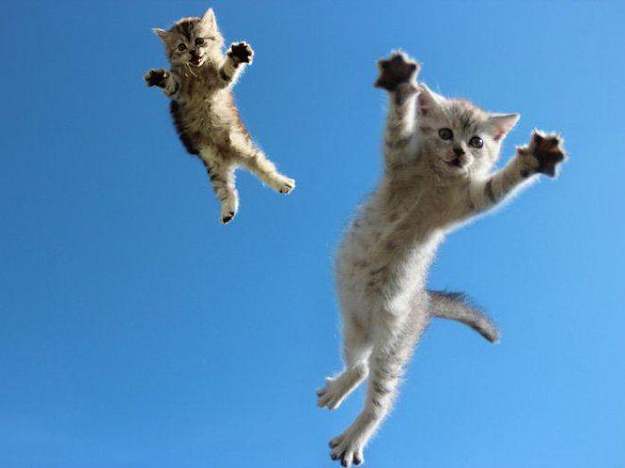 gatti volanti 6