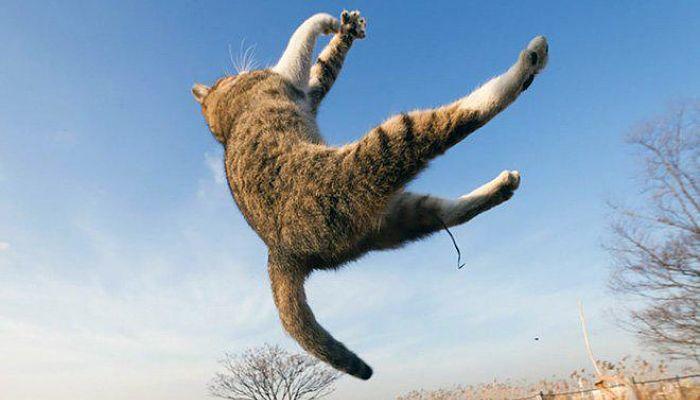 gatti volanti 7