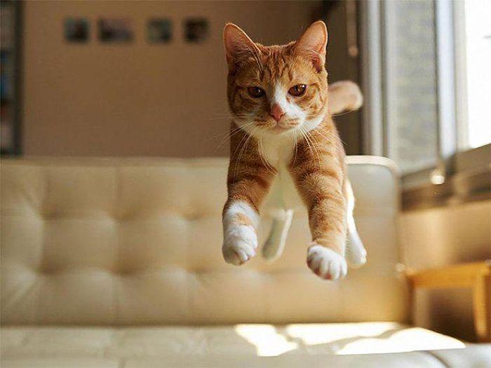 gatti volanti 9