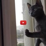 Il gattino che vede la neve per la prima volta [VIDEO]