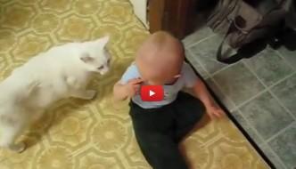 Gatto sordo gioisce col suo piccolo amico [VIDEO]