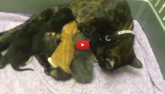 Mamma gatta allatta lo scoiattolo orfanello [VIDEO]
