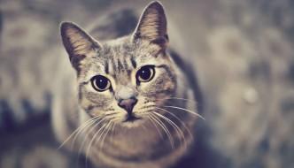 I gatti ci guardano per cercare approvazione
