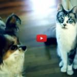 Jake, il gatto che ha provato a salvare l'amico depresso [VIDEO]