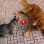 Caro cane, non scherzare mai col gatto! [VIDEO]