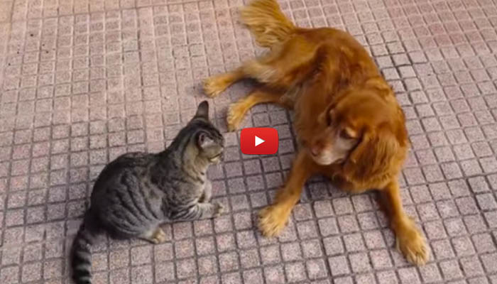 Caro cane non scherzare mai col gatto video for Gatto miagola sempre
