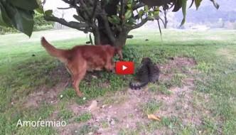 Cane e gatto si uniscono nella caccia al topo [VIDEO]