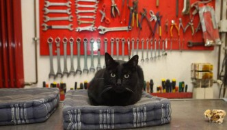 La ferramenta si trasforma in un ostello per gatti trovatelli