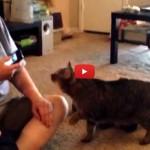 Ecco la reazione di un gatto alla app del linguaggio felino [VIDEO]