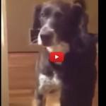 Jasper, il gatto che abbraccia l'amico ritrovato [VIDEO]