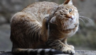 Rimedi contro i parassiti dei gatti. Alcuni suggerimenti utili