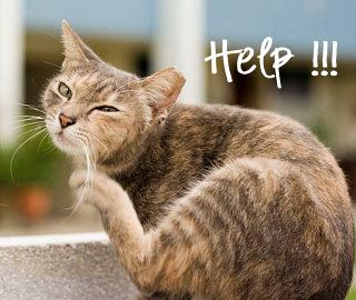 gatto zecche rimedi pulci parassiti consigli