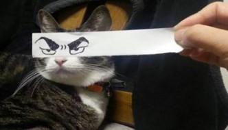 Gatti con occhi di manga