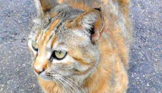 Padrona in ospedale: il quartiere adotta la gatta Melissa