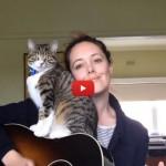 George, il gatto che ama la chitarra [VIDEO]