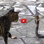 Gatti, che epic fail! [VIDEO]