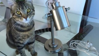 Ritrovato Felix, il gatto smarrito sul volo per New York