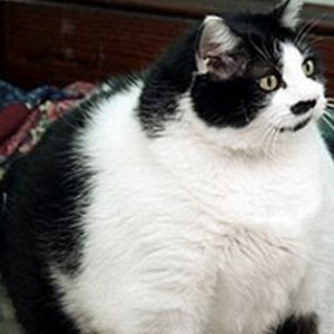gatta grassa