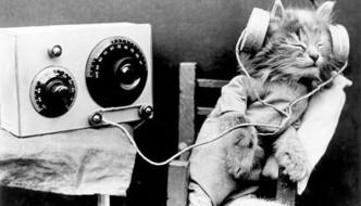 I gatti si rilassano con la musica classica