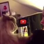 I gatti amano il seno delle donne [VIDEO]