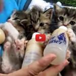 Gattini il pranzo è servito! [VIDEO]