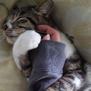 gatto fidanzato
