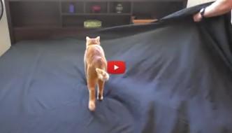 Rifare il letto con un gatto? Impossibile! [VIDEO]
