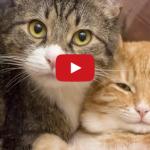 Un gatto in più è sempre meglio! [VIDEO]