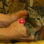 Gattino tenerissimo si rilassa facendo il bagnetto [VIDEO]