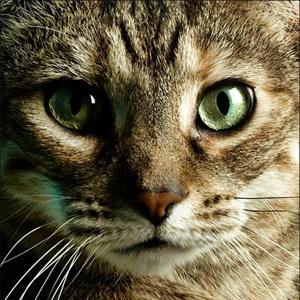 gatti spirito