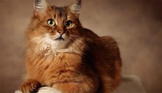Le 7 vite dei gatti? Merito della vitamina D