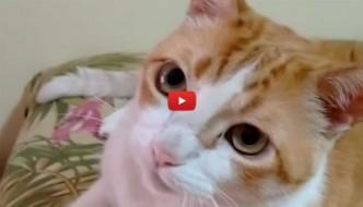 Il gatto canterino [VIDEO]