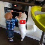 Gatto allontana bimbo dal forno [VIDEO]