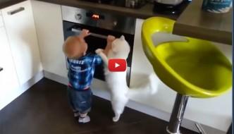 Gatto allontana bimbo dal forno [VIDEO]