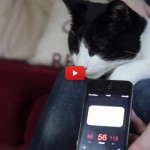 Il gatto Merlino fa le fusa più rumorose al mondo [VIDEO]