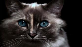 I gatti proteggono il nostro spirito