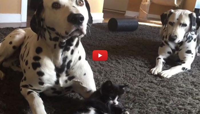 Gattino gioca con pongo e peggy video