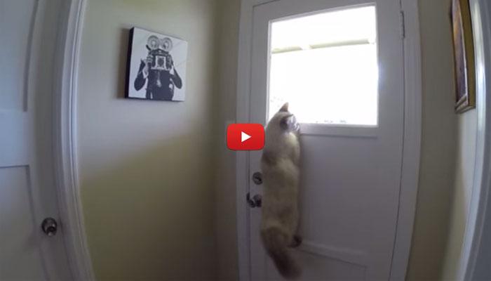 Suonano alla porta risponde il gatto video - Porta che sbatte suono ...