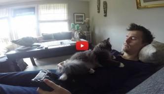 Umano gioca alla Play, ma il gatto vuole solo le coccole [VIDEO]