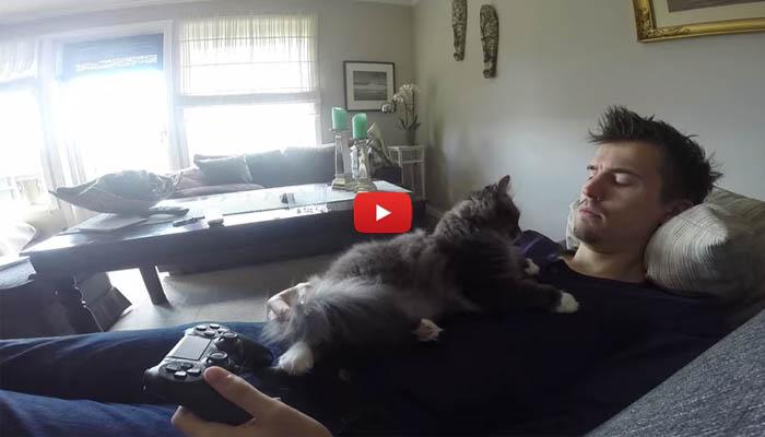 Umano gioca alla play ma il gatto vuole solo le coccole - Gatto solo in casa per 15 giorni ...