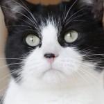 Come soddisfare il tuo gatto! [VIDEO]