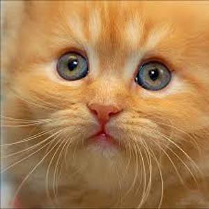 Il cervello dei gatti superiore a quello umano for Youtube cani e gatti