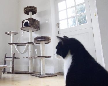 come rendere felice gatto 2