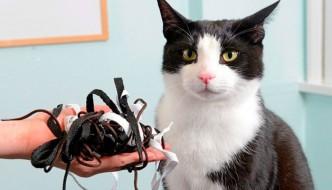 Garry, il gatto goloso di lacci per le scarpe