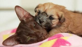 «La mia gatta ha partorito un cane»