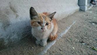 Egitto, gattina randagia si sacrifica e salva soldati dall'avvelenamento