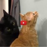 I gatti domineranno il mondo: ecco i 9 segnali! [VIDEO]