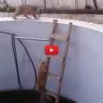 Chi la fa l'aspetti: e il gatto cade in piscina [VIDEO]