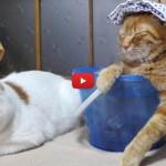 Relax estremo: il gatto si rilassa nel secchio [VIDEO]