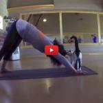 Fare yoga con i gatti senza famiglia [VIDEO]
